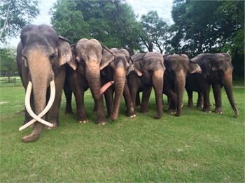 Elephant Appreciation Day annual fund raiser festival